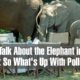 Let's Talk About the Elephant in the Room: So What's Up With Pollexy?